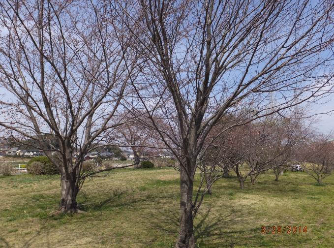 2014-03-29_23h49_10