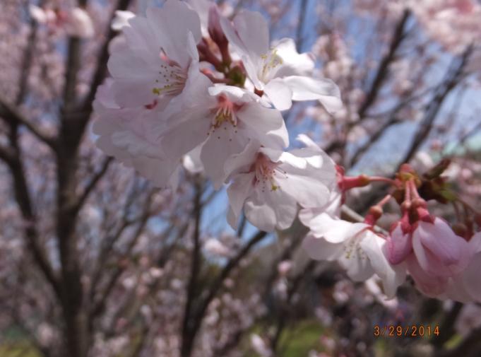 2014-03-29_23h52_38